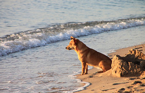 Dog friendly beach resorts in Veneto