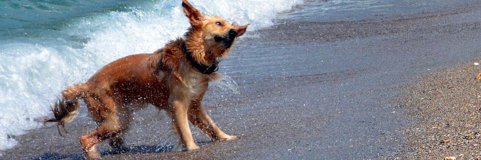 Bibione_cani_spiaggia