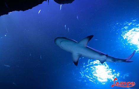 SeaLife, l'acquario di Jesolo